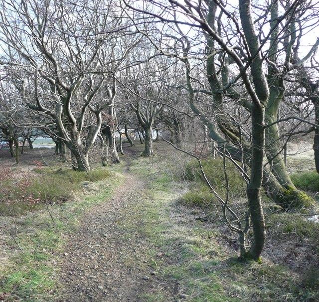 Path through the wood, Barkisland