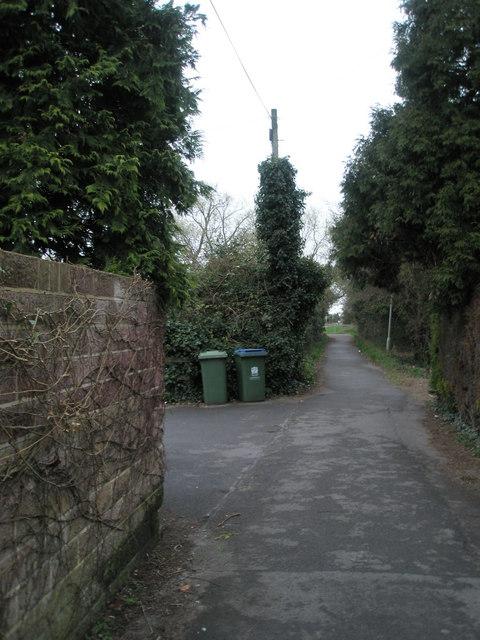 Ivy clad telegraph pole on Wicor Path