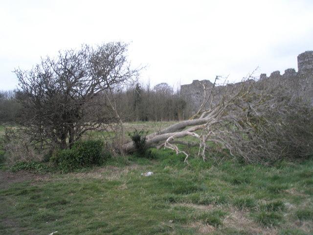 Bush and tree outside castle walls