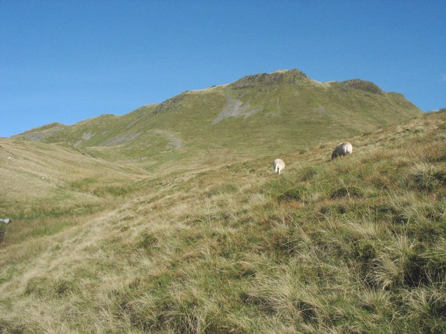 Sheep grazing on the slopes of the upper Barlwyd valley