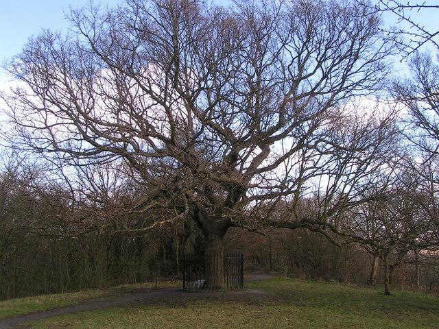 Oak of Honour