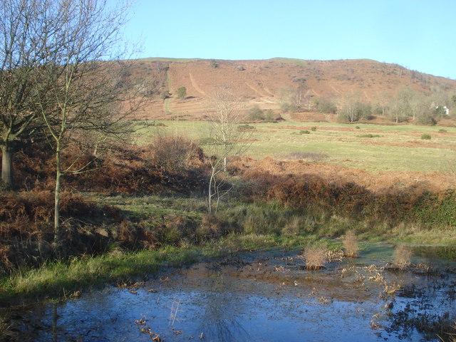 Small pond on Castlemorton Common