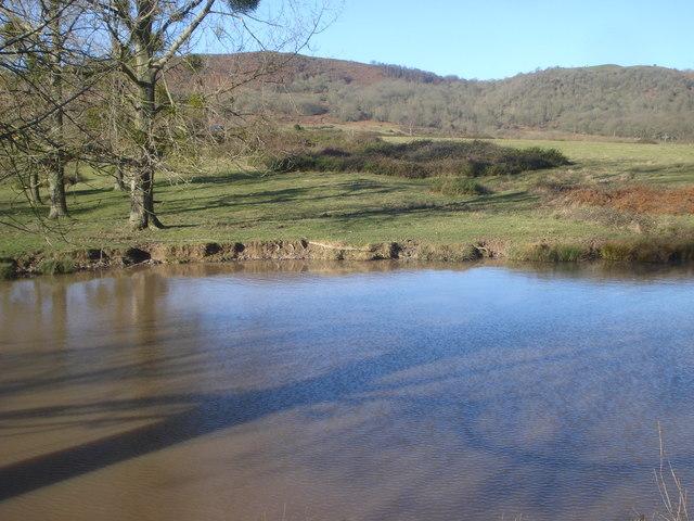 Pond on Castlemorton Common