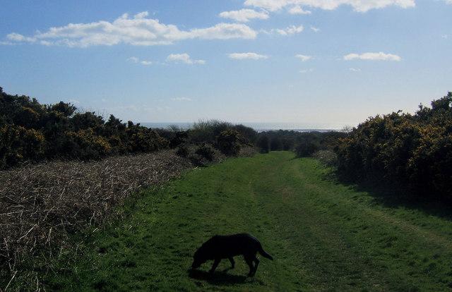Footpath through Blatchington Golf Course, Seaford