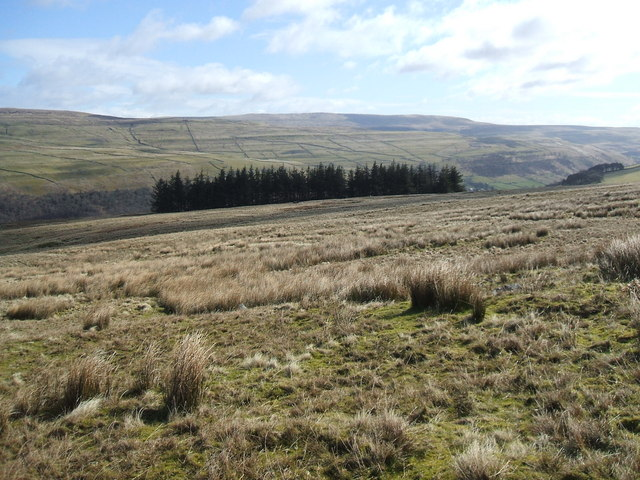 Birks Fell and Birks Wood