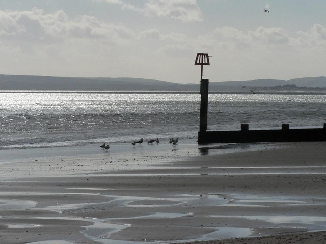 Boscombe: gulls around groyne