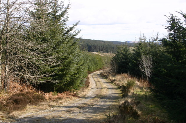 Ceiriog Forest
