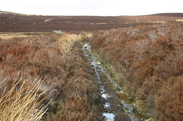 Footpath across moorland