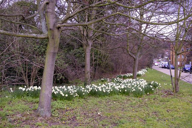 Daffodils, Enfield Road, Enfield, EN2