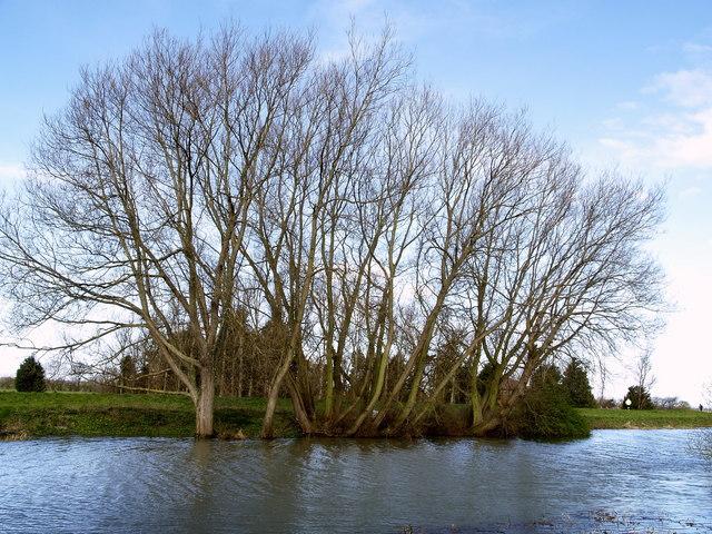 Riverside Trees north of Tickton Bridge
