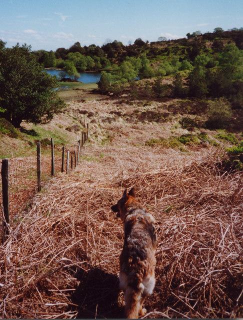 Boretree Tarn, the walk in