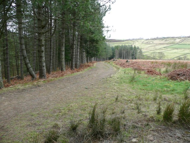 Forest track, Wooldale (Holmfirth)