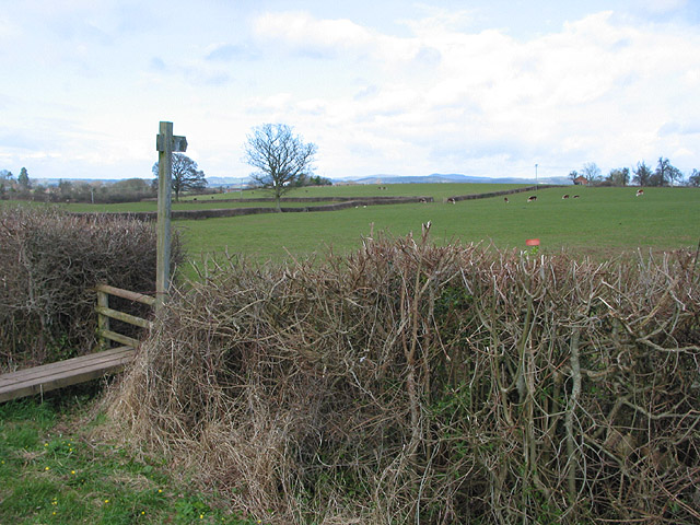 Footpath through pasture