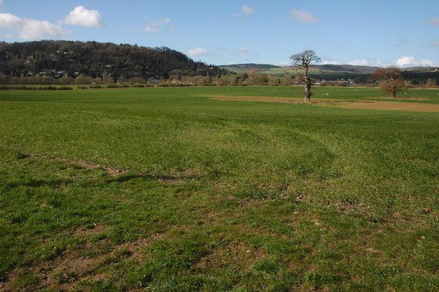 Meadowland near Symonds Yat