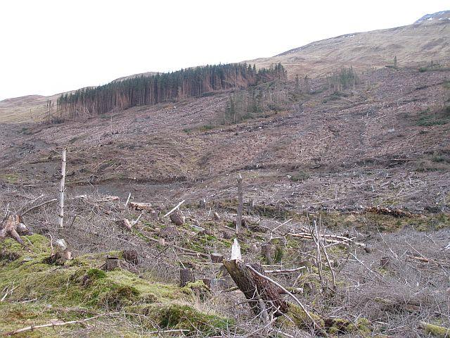 Felled forest, Blàr a' Chaorainn
