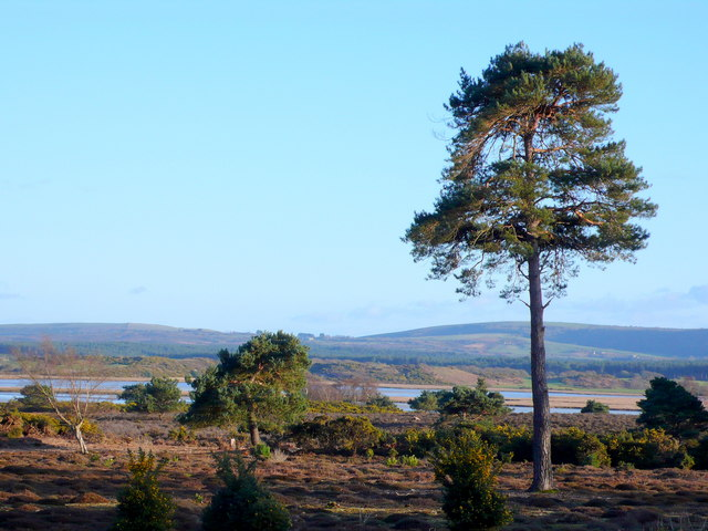 View across Grip Heath