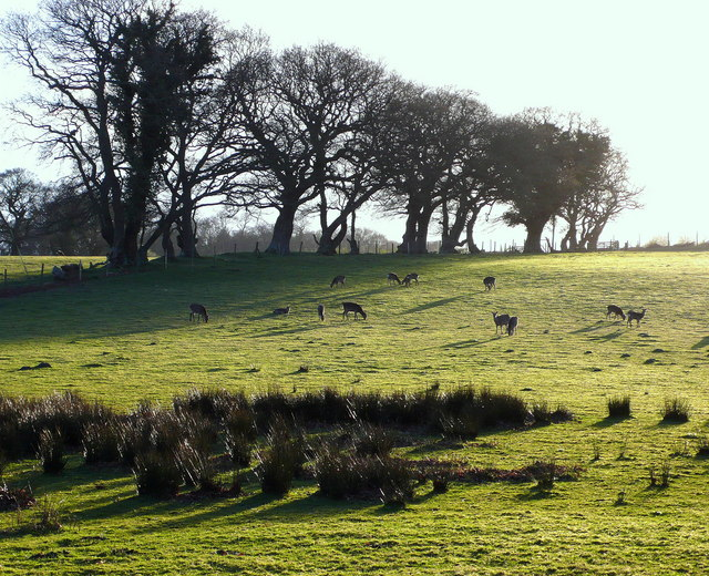 Herd of deer grazing in the evening sun