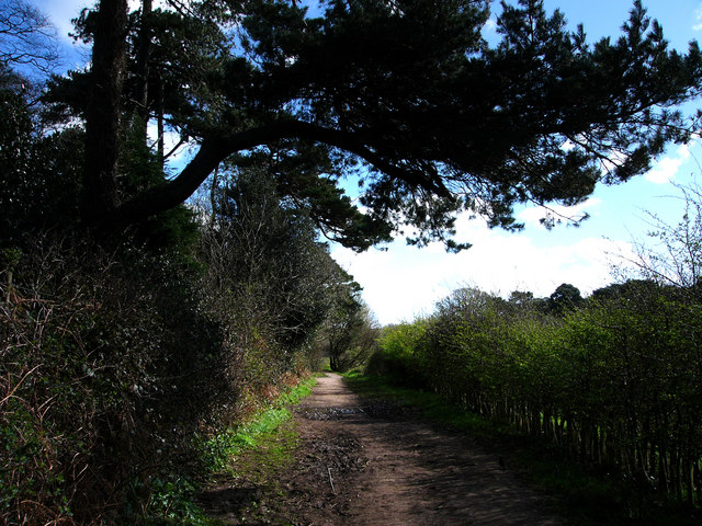 The path from Studland to Old Harry Rocks