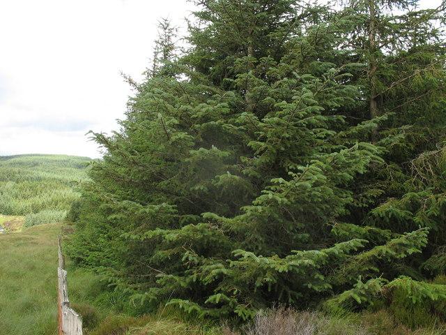 Forest/moorland boundary  north of Bryn Mawr