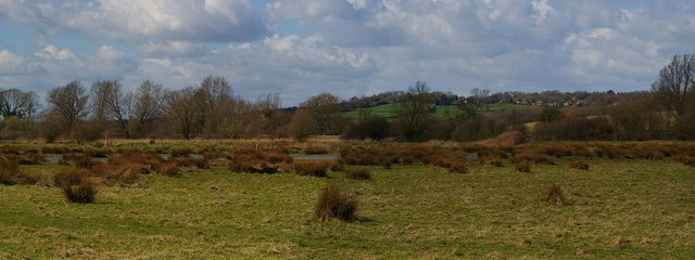 Marshland near the River Brede