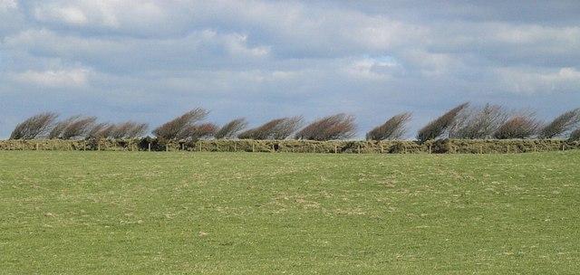 Wind-shaped bushes, Tich Barrow