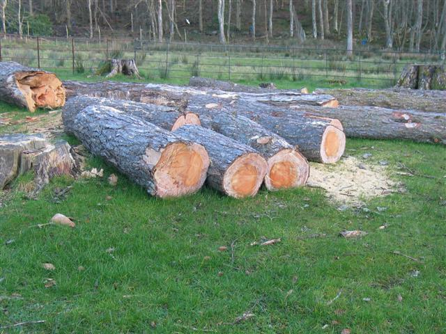 Felled trees in Killean estate