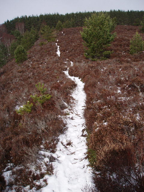 Footpath Through Heather