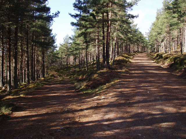 Track Junction, Tolquhonie Wood