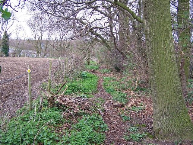 Footpath in Church Wood, Stockbury