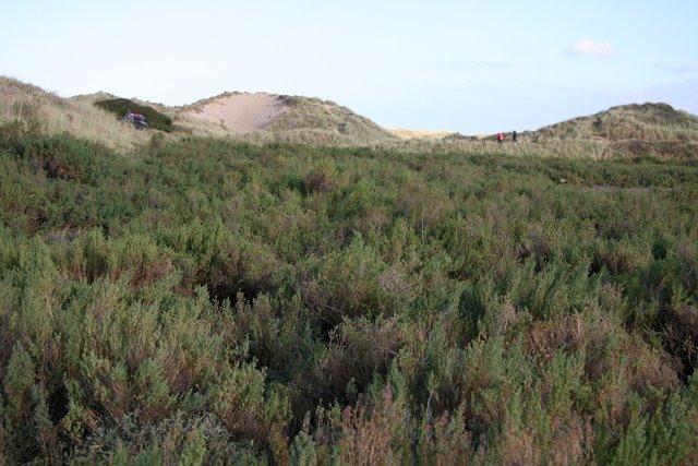 Edge of Saltmarsh
