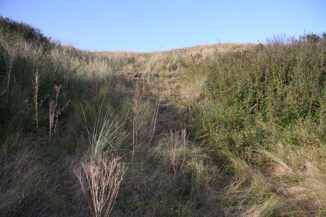 Back edge of dunes