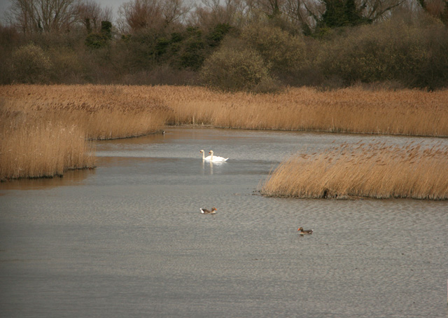 Fowlmere Nature Reserve