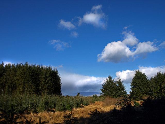 Airiequhillart Forest
