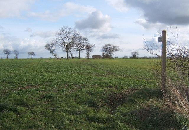 Suffolk fields north of Battisford, looking south