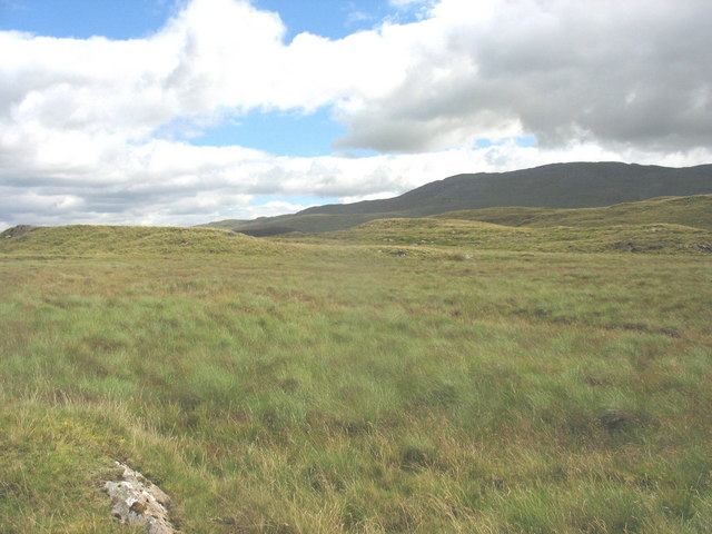 Tussocky grass on the summit plateau of Bryn Mawr