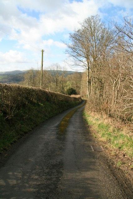 Beehive Lane