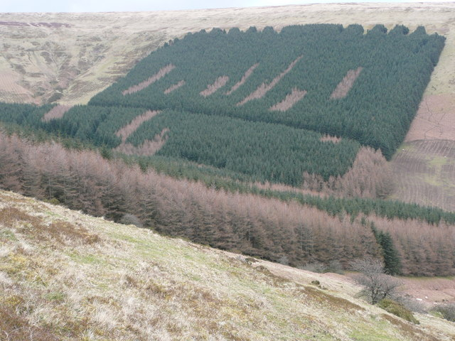Forestry south of Hay Bluff