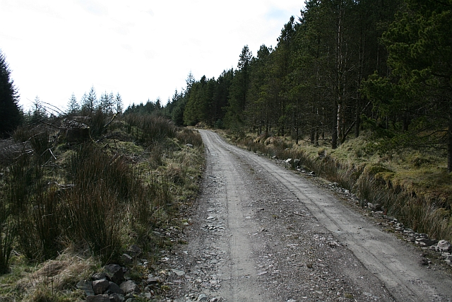 Kintyre Forestry Road (1)