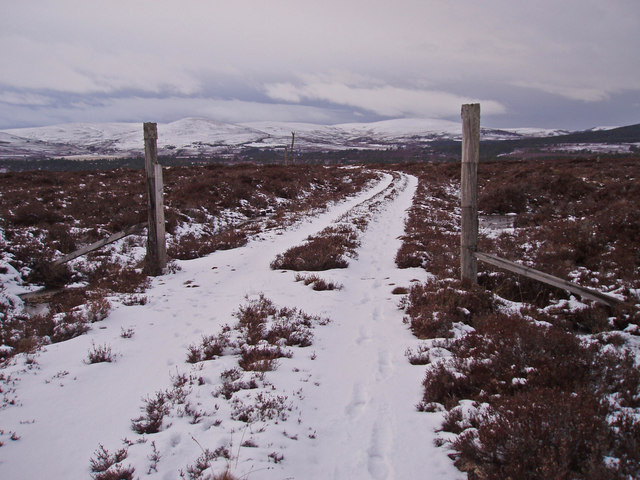 Track & Old Gateposts