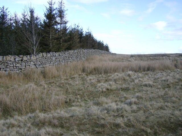 On Mynydd Garnclochdy
