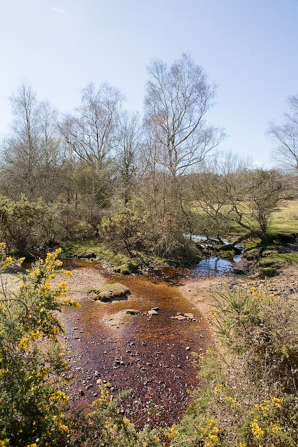 Stream that drains West Wellow Common