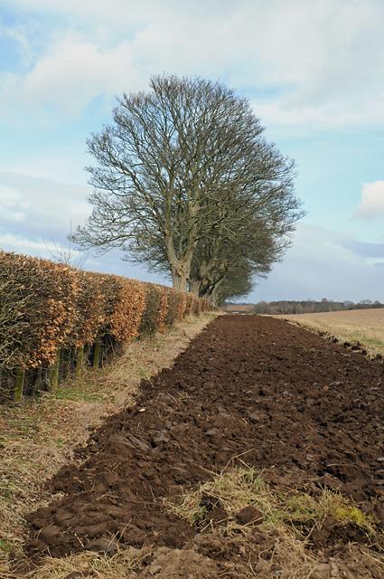 Hedge and Farmland