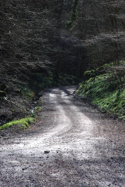 Woodland track, near Symonds Yat