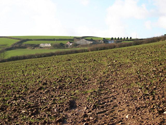 Fields near Wringford Farm