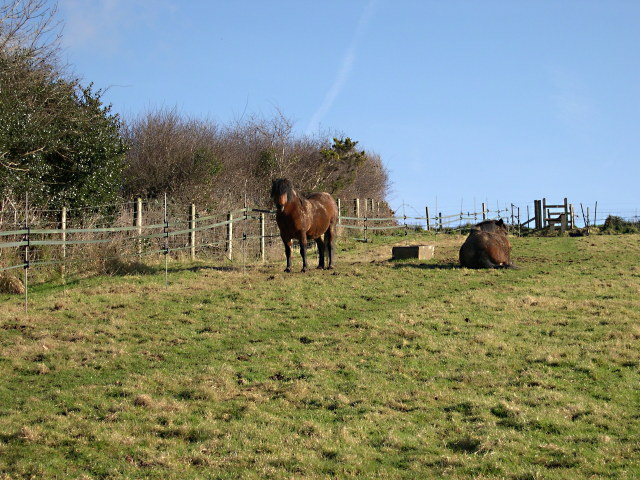 Horses by the Footpath