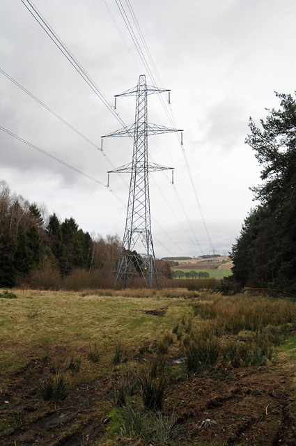 Power Lines through Kirkinch Wood