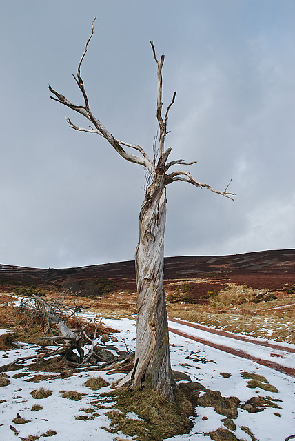 Remains of a tree on the track to Glencat