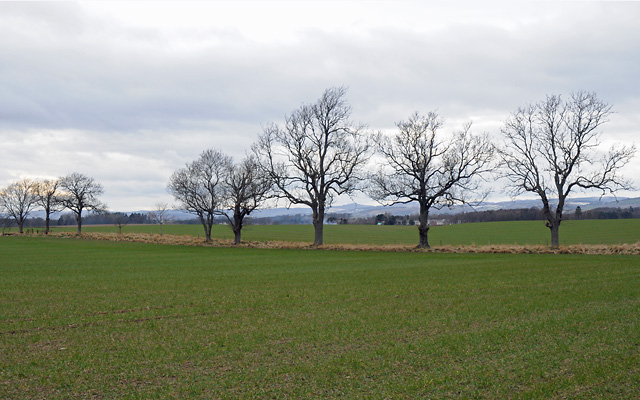 Farmland and Trees