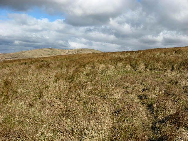 Rough hill grazing
