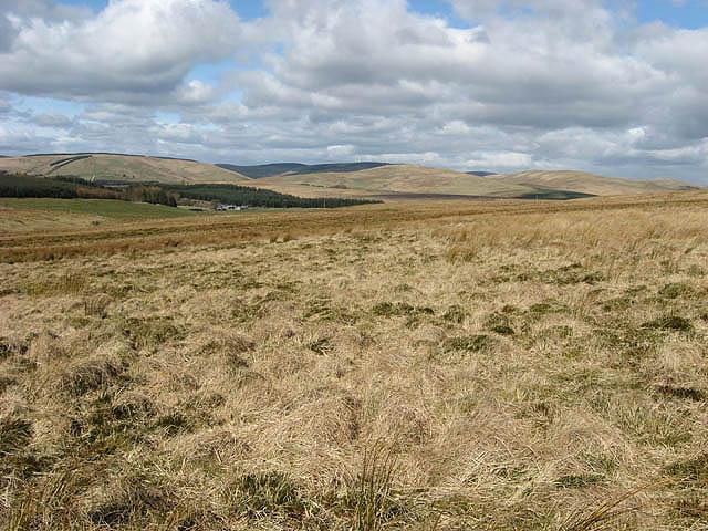 Rough grazing near Whaup Knowe